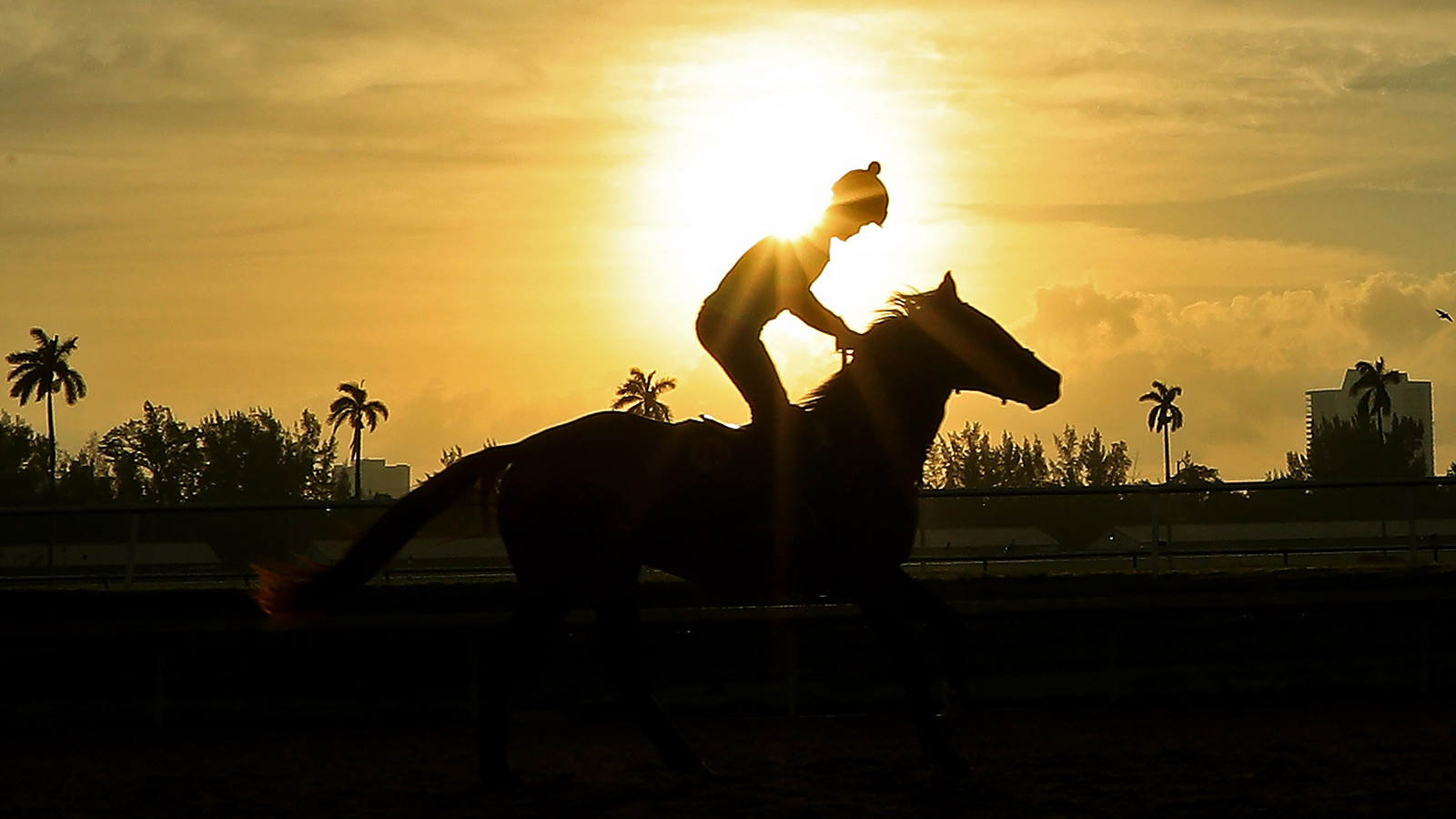 2020 Pegasus World Cup Entries Post Positions Odds