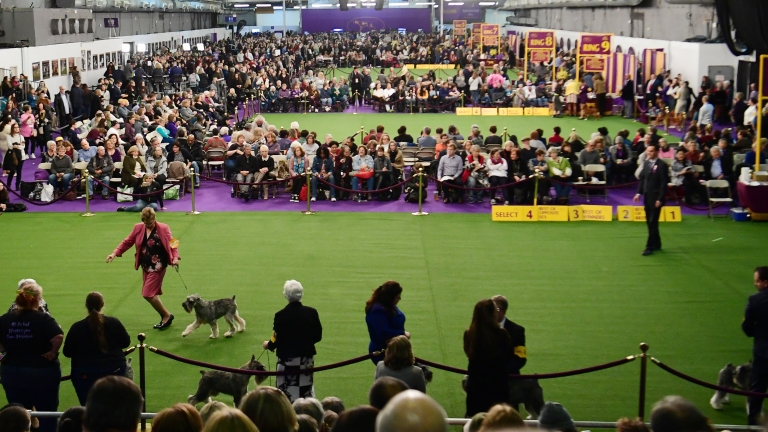 Hundreds of dogs dash for Westminster agility title - NBC Sports